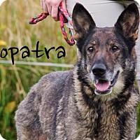 Adopt A Pet :: Cleopatra - Joliet, IL