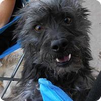 Adopt A Pet :: **YODA - Peralta, NM