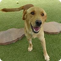 Adopt A Pet :: Jackson - Yorktown, VA