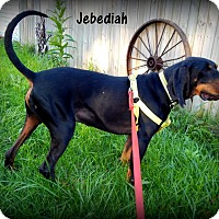 Adopt A Pet :: Jebediah - Washington, PA