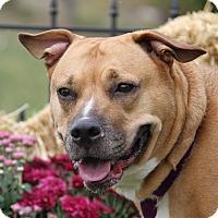 Adopt A Pet :: Daisy Duke (aka Dukey)-Spayed - Marietta, OH