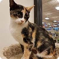 Adopt A Pet :: Savannah - Colonial Heights, VA