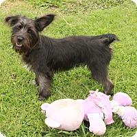 Adopt A Pet :: Trixie - Foster, RI