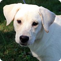 Adopt A Pet :: Tucker Ray - Glastonbury, CT