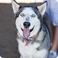 Adopt A Pet :: Iris - Fresno CA, CA