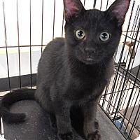 Adopt A Pet :: Jaz - Lake Panasoffkee, FL