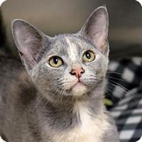 Adopt A Pet :: Baby Girl - Ann Arbor, MI