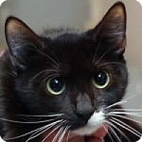 Adopt A Pet :: Greta - Medford, MA