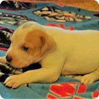 Adopt A Pet :: Spot - Wichita Falls, TX