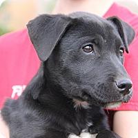 Adopt A Pet :: Jaelo - Pittsboro, NC