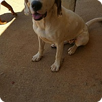 Adopt A Pet :: Aleeta May - Demorest, GA