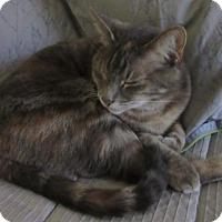 Adopt A Pet :: Abbie - San Antonio, TX
