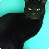 Adopt A Pet :: Nightwing - Brookings, SD