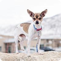 Adopt A Pet :: Lily - Ogden, UT