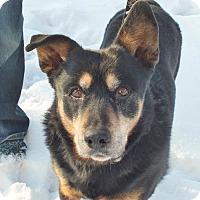 Adopt A Pet :: Tumi - Minneapolis, MN