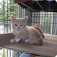 Adopt A Pet :: Nala - CARVER, MA