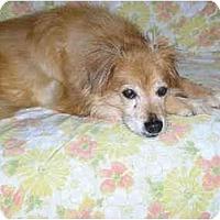 Adopt A Pet :: Bo - Harriman, NY, NY