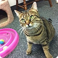 Adopt A Pet :: Jade - Jenkintown, PA
