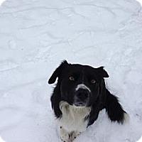 Adopt A Pet :: Major - Chewelah, WA