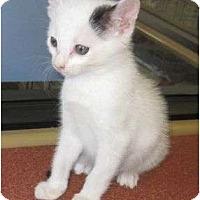 Adopt A Pet :: Buddy - Los Alamitos, CA