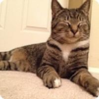 Adopt A Pet :: Felix - Vancouver, BC