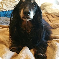 Adopt A Pet :: Olive - Decatur, GA