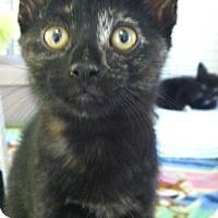 Adopt A Pet :: Pancake - Bensalem, PA