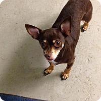Adopt A Pet :: Romeo - Boston, MA