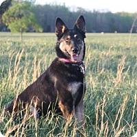 Adopt A Pet :: Nika - Morrisville, NC