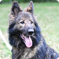German Shepherd Dog Dog for adoption in Pike Road, Alabama - Bear Newman