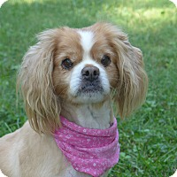 Adopt A Pet :: Maybelle - Mocksville, NC
