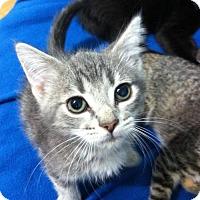 Adopt A Pet :: Cooper - Watkinsville, GA