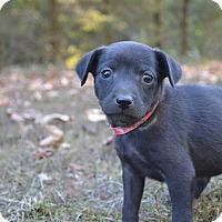 Adopt A Pet :: Marsha - Charlemont, MA