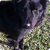 Adopt A Pet :: Odin - Memphis, TN