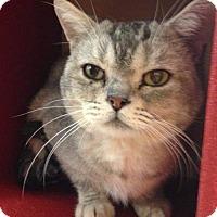 Adopt A Pet :: Zebeedee - Glendale, AZ