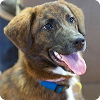 Adopt A Pet :: Sadie - Knoxville, TN