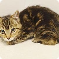 Adopt A Pet :: *BUFFY - Sacramento, CA