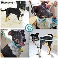 Adopt A Pet :: Hummer - Kimberton, PA