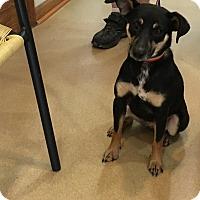 Adopt A Pet :: Girlie - Hohenwald, TN