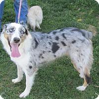 Adopt A Pet :: LEO ~ STUNNING!! - WOODSFIELD, OH