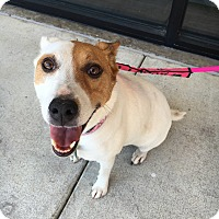 Adopt A Pet :: Daisy - Van Alstyne, TX