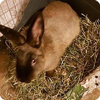 Adopt A Pet :: Suki - Hazlet, NJ