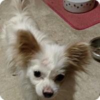 Adopt A Pet :: Crouton - San Diego, CA