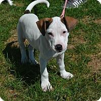 Adopt A Pet :: Bianca *Puppy - Akron, OH