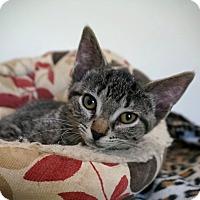 Adopt A Pet :: Lealah - Manitowoc, WI