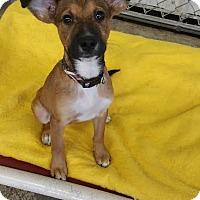 Adopt A Pet :: JOSE - Baudette, MN