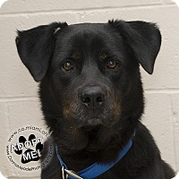 Adopt A Pet :: Luke- URGENT - Troy, OH