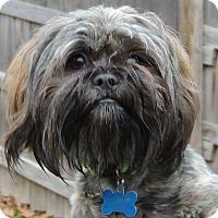 Adopt A Pet :: Tucker - Joplin, MO