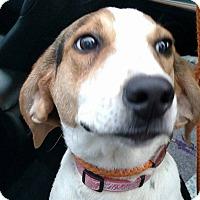 Adopt A Pet :: Fannie Mae - Sweetwater, TN