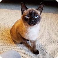 Adopt A Pet :: Pamela - Arlington/Ft Worth, TX